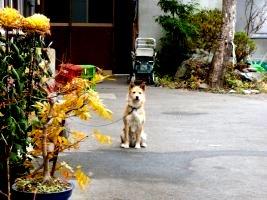 渡邉家の猛犬
