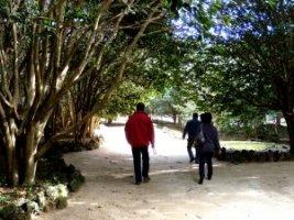 椿群生林を散策する澄川さんと比留間さん